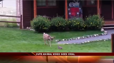 fawn vs, bunny-20150713222129_1439524757772.png