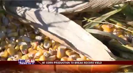 Corn Crop-20151009214745_1447129490465.png