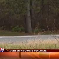 Deer on Roads-20151016214539_1447734891030.png