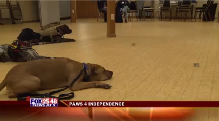 Paws 4 Independance_1455593184675.png