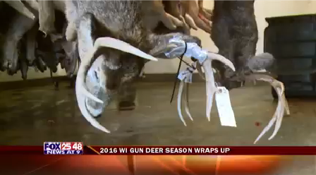 2016 Wisconsin Deer Season Wraps Up_1480303681363.png