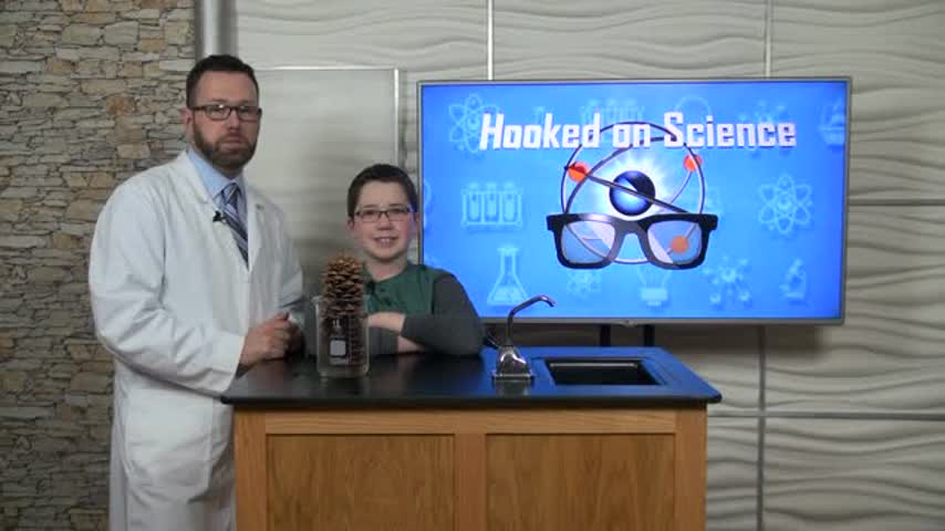Hooked On Science- Pinecone_09411105