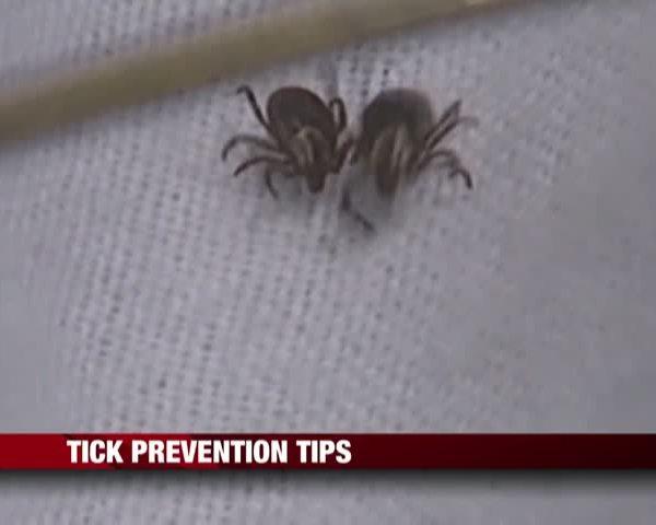 Tick Prevention Tips_05567501