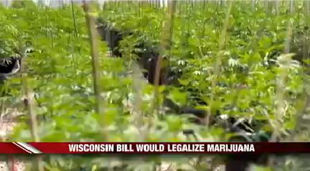 Marijuana Legislation_1499998488058.png