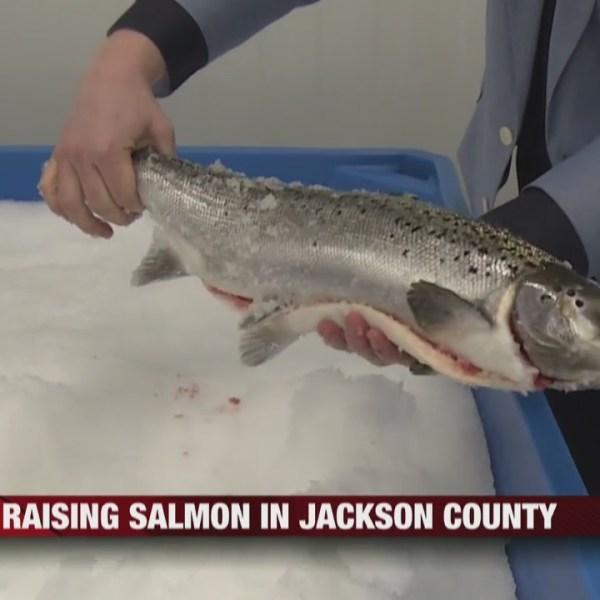 Raising_Salmon_in_Jackson_County_0_20190227161306