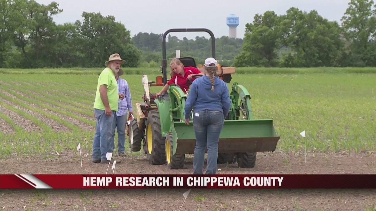 Hemp_research_in_Chippewa_County_0_20190612141849