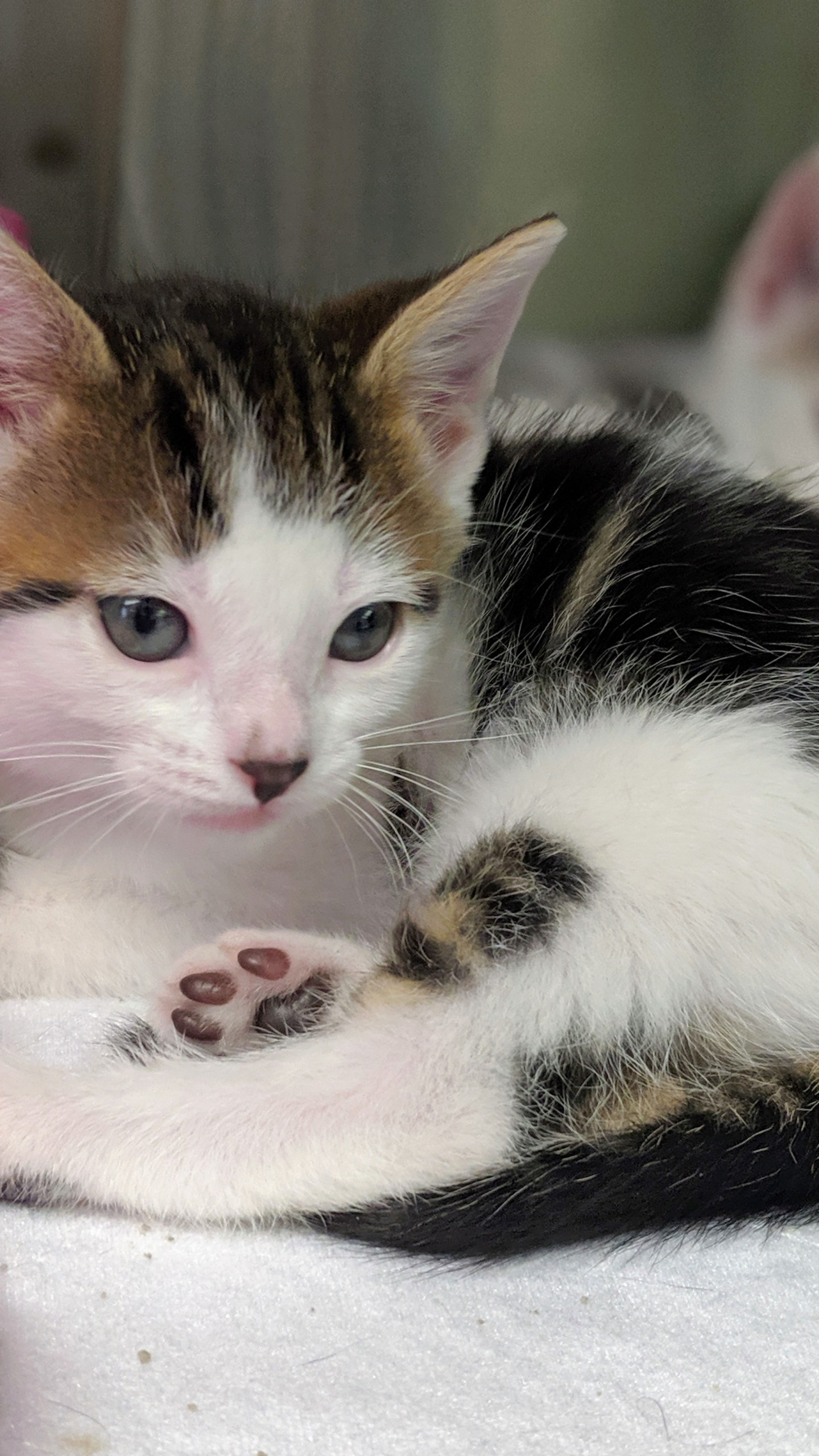 La Crescent Animal Rescue Pet of the Week: Friedrich and