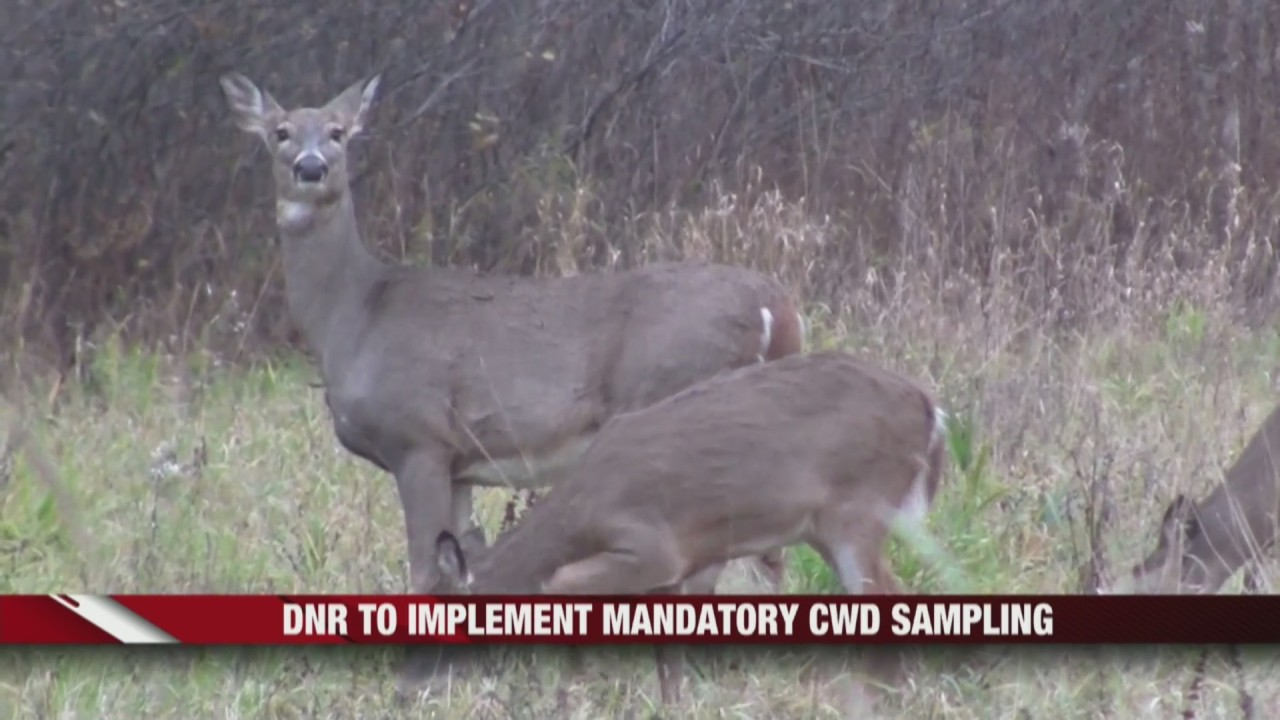More Mandatory Cwd Testing During 9 Day Gun Deer Season