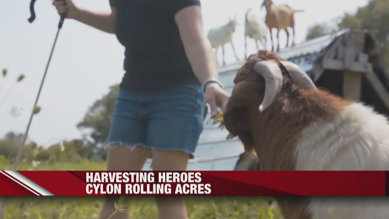 Harvesting Heroes Cylon Rolling Acres - the pasture-based goat farm