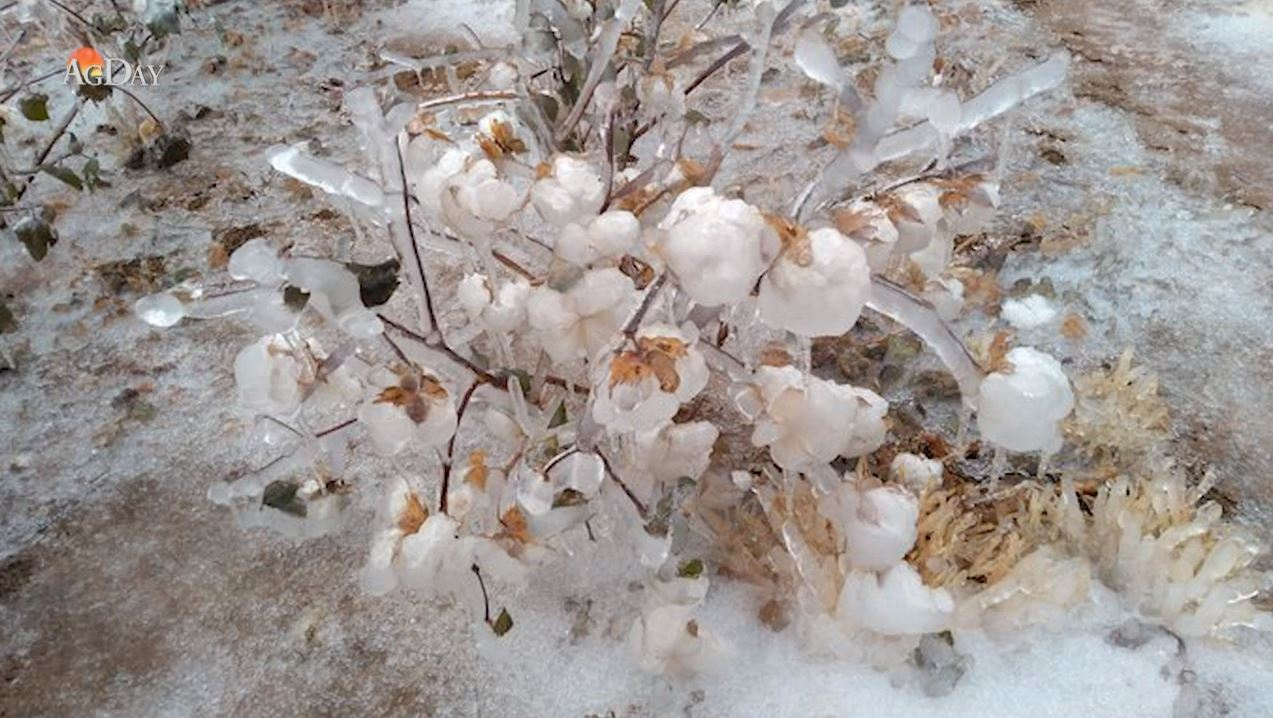 Early Ice and Snowstorm Hits the Southern Plains