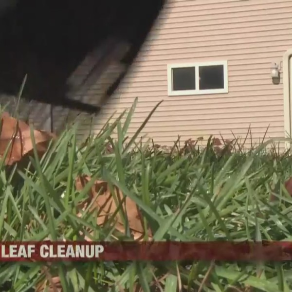 Importance of leaf cleanup