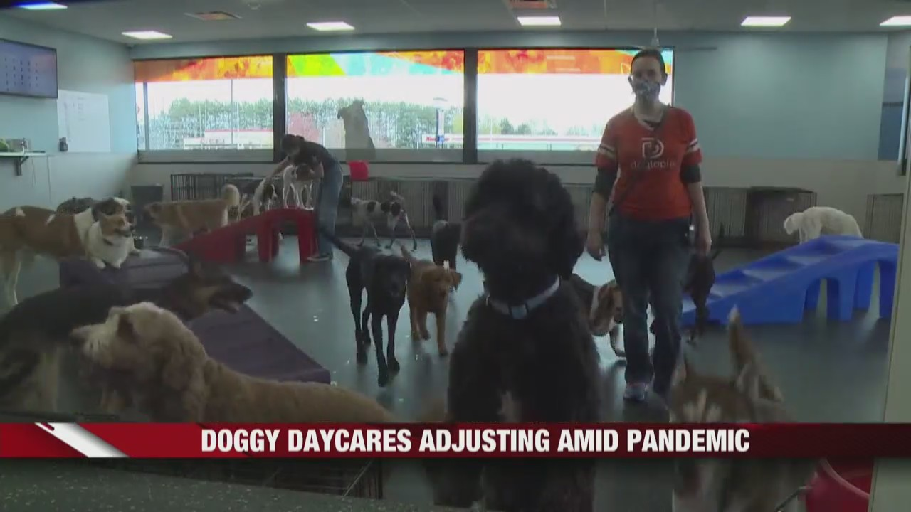 Local doggy daycares adjusting amid pandemic