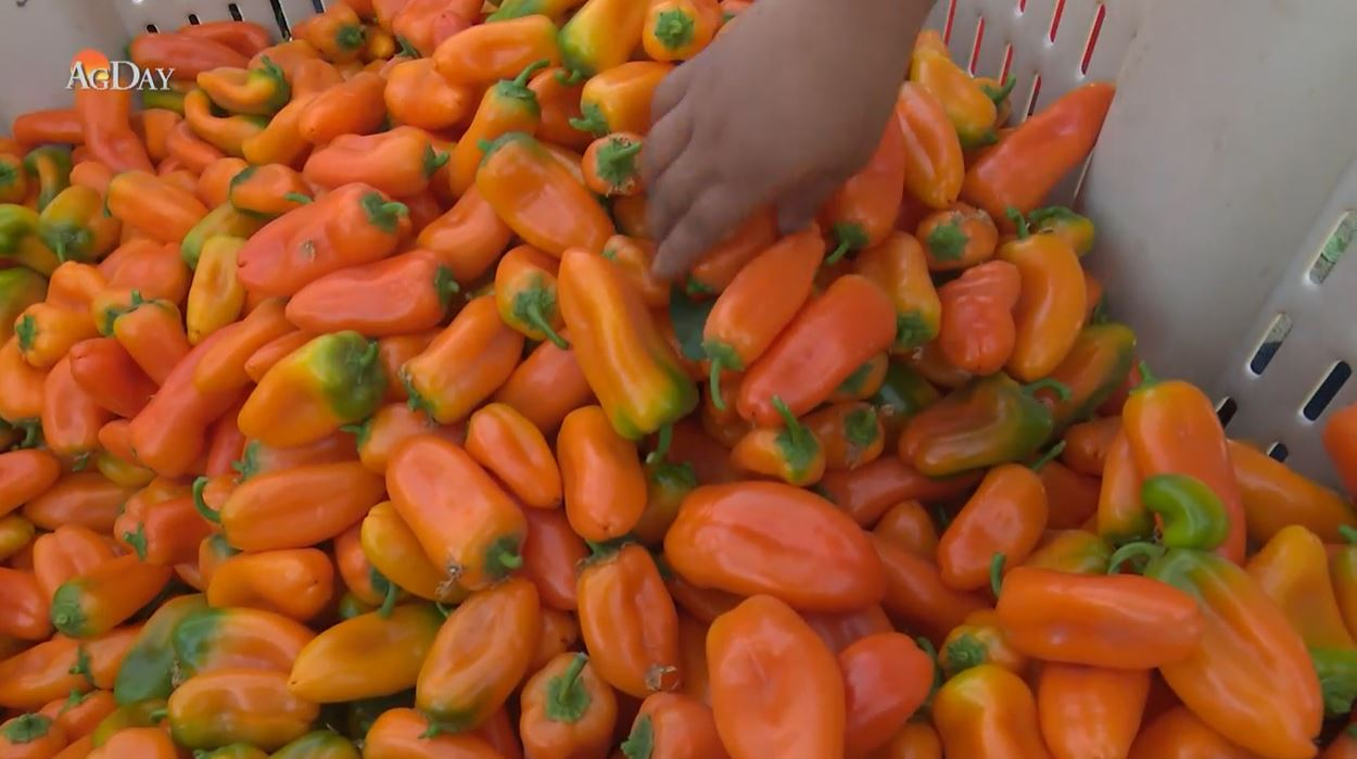 People Who Eat Chili Peppers May Live Longer