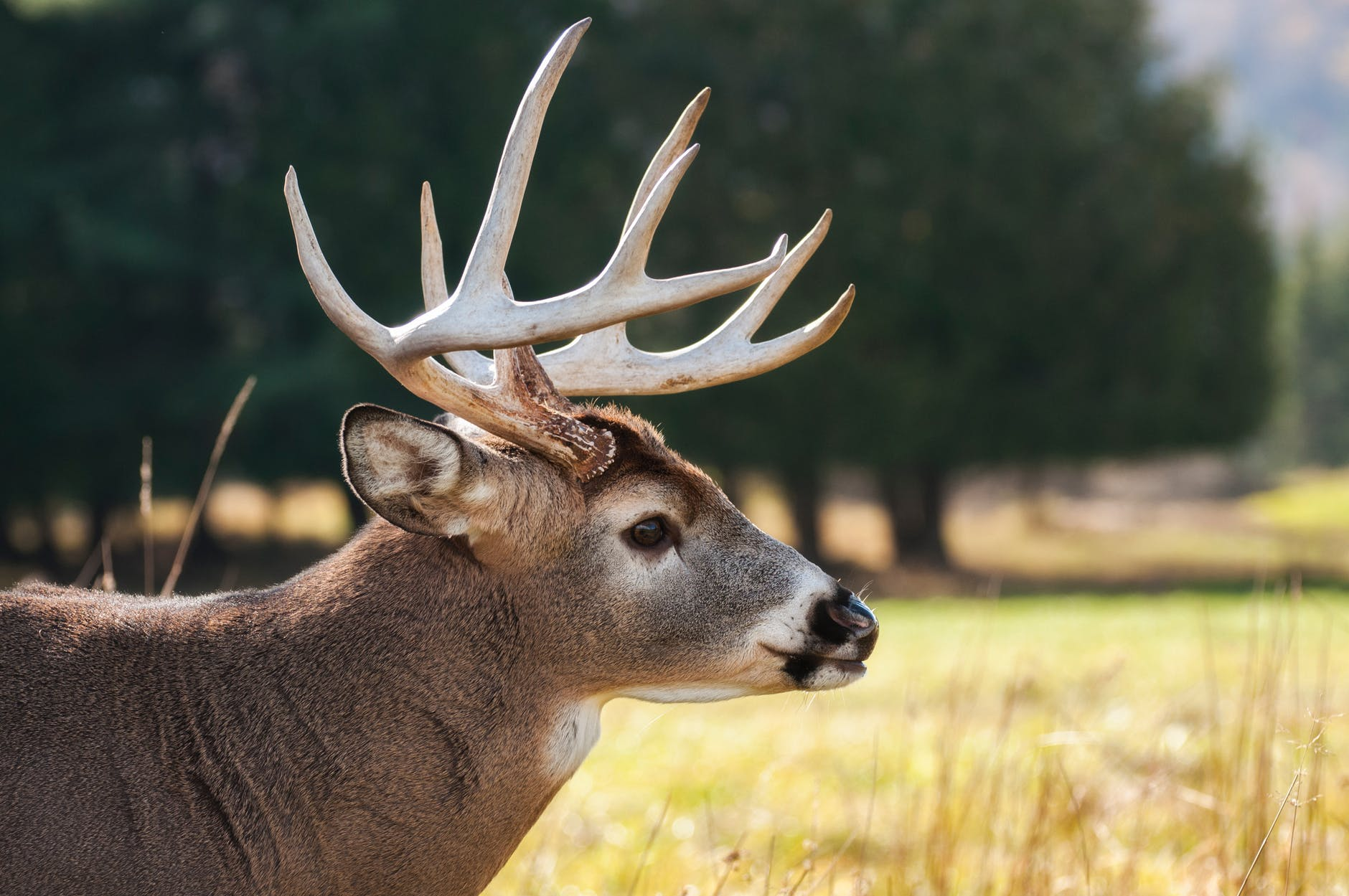 Wisconsin hunters asked to 'keep an eye out' for more than just deer