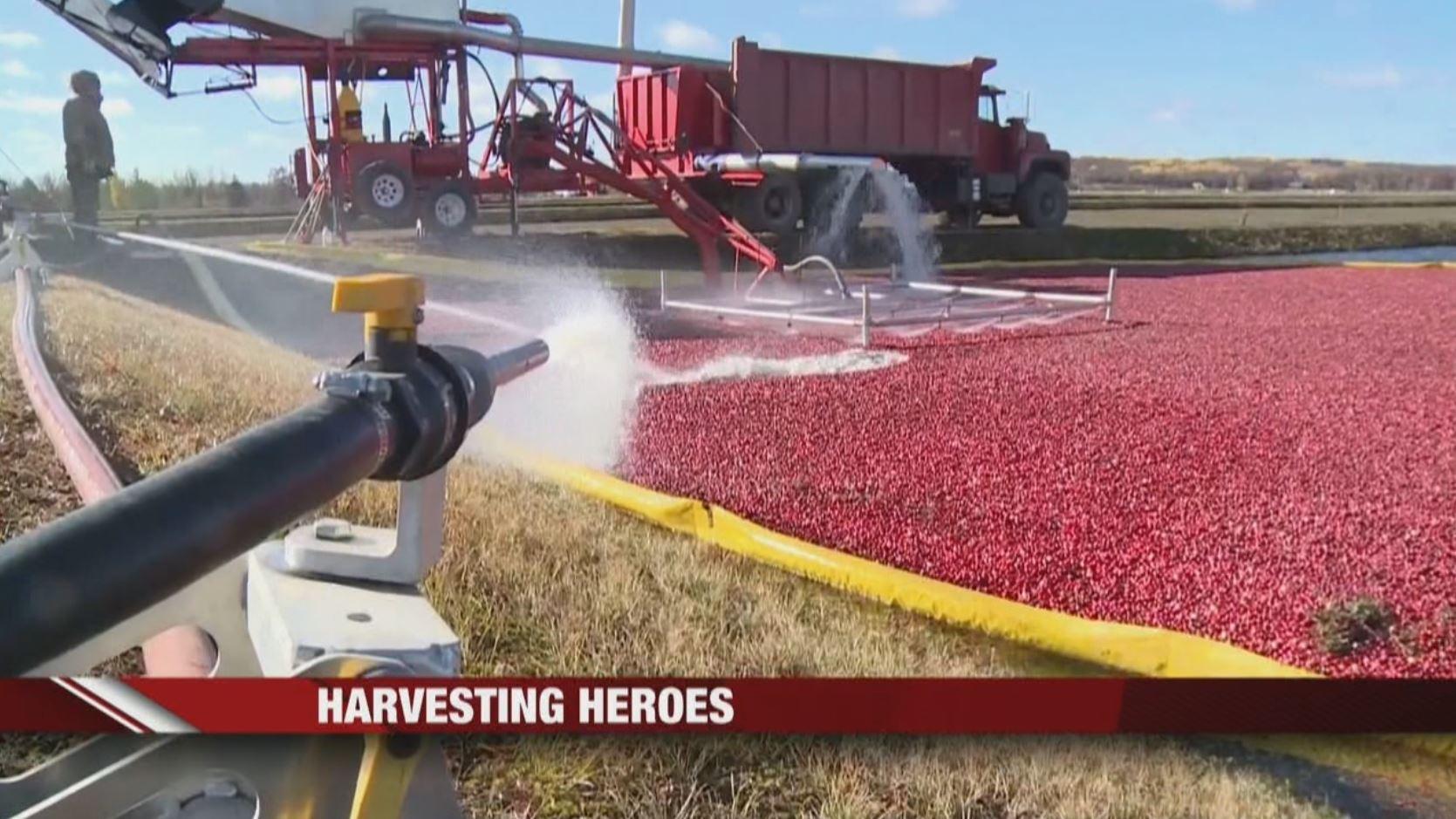 harvesting heroes