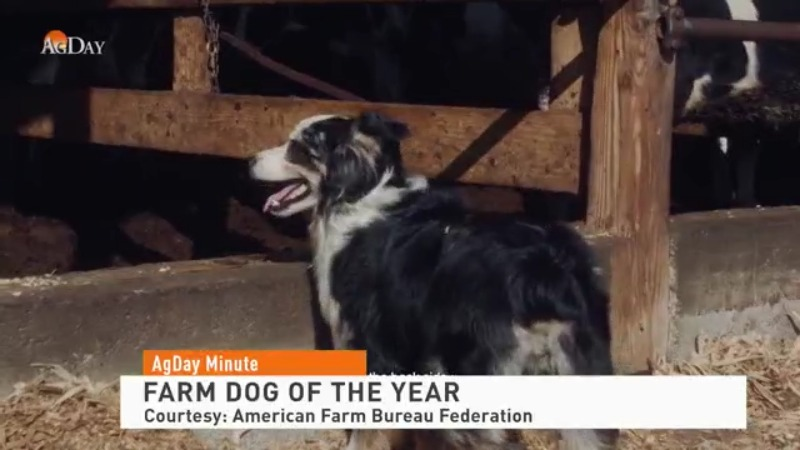 Meet the Farm Dog of the Year!