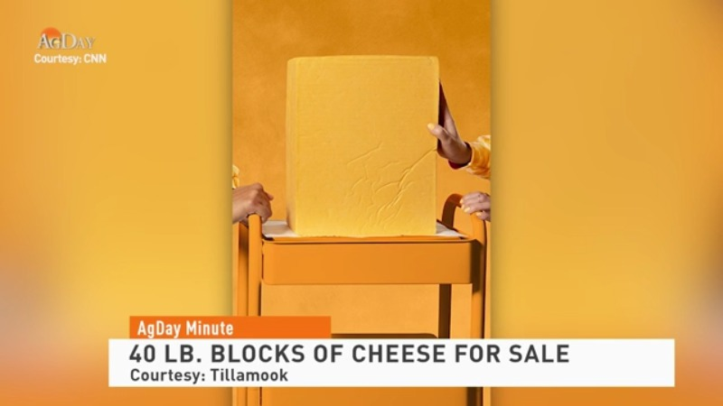 """The Mother Loaf""-40 lb. Blocks of Cheese for Sale"