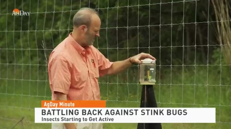 Battling Back Against Stink Bugs