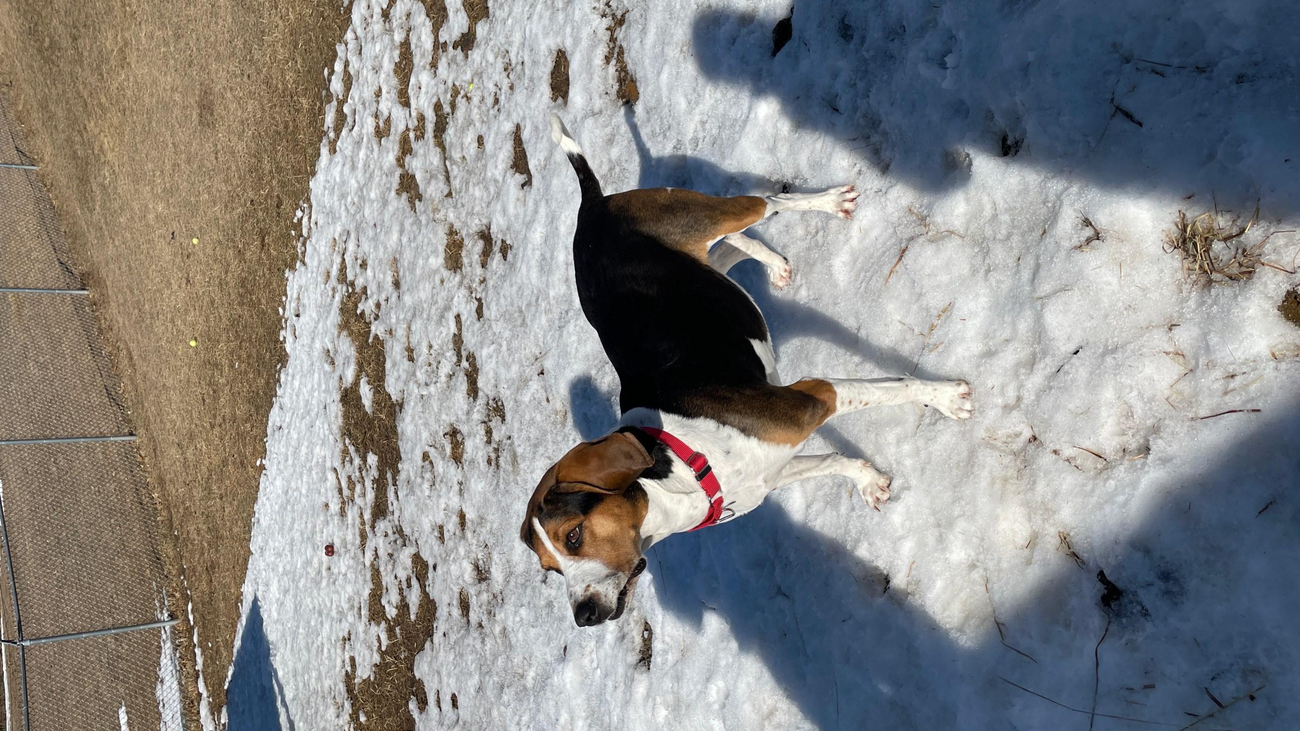 Eau Claire County Humane Association Pets of the Week: Leia