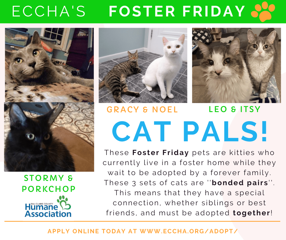 ECCHA Cat Pals!