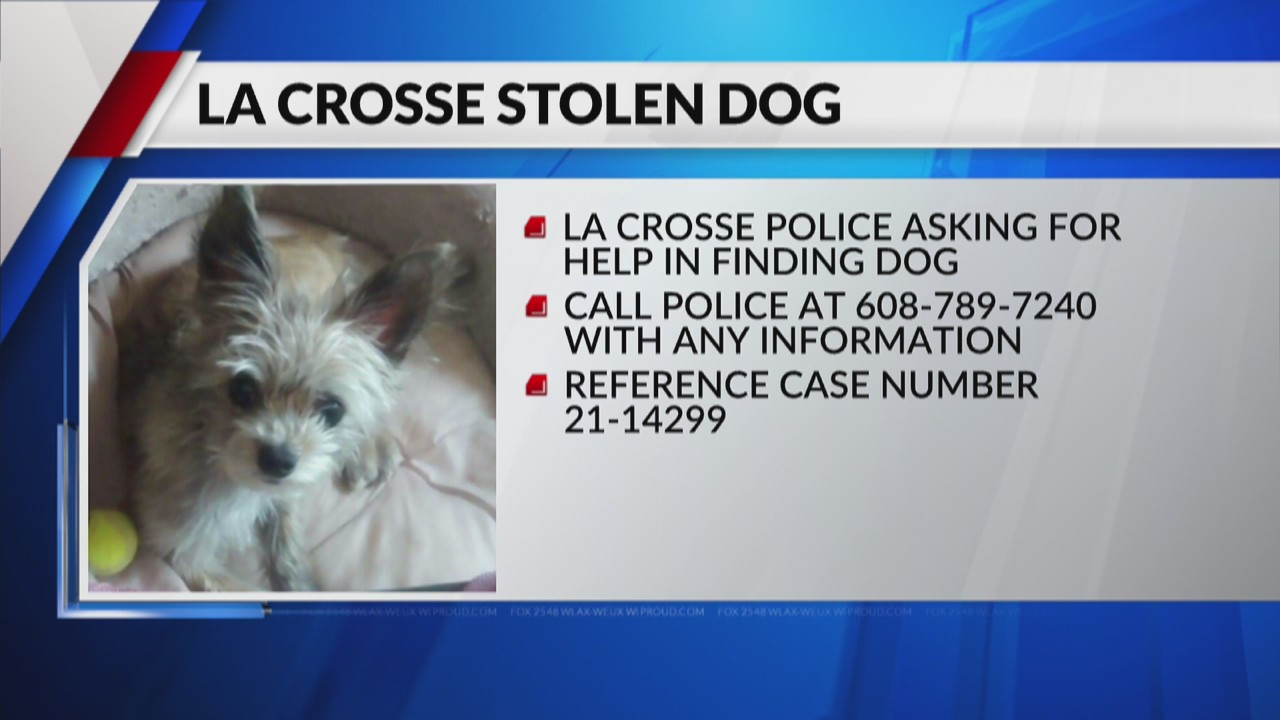 La Crosse Police Department request assistance in locating stolen dog