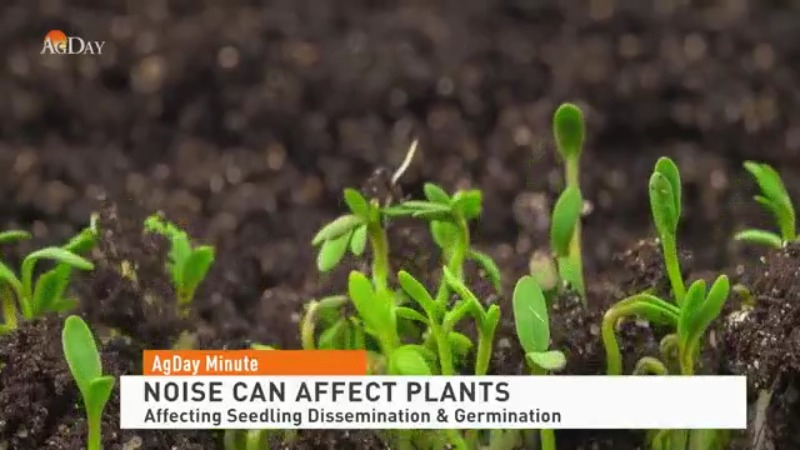 Noisy conditions can affect plants