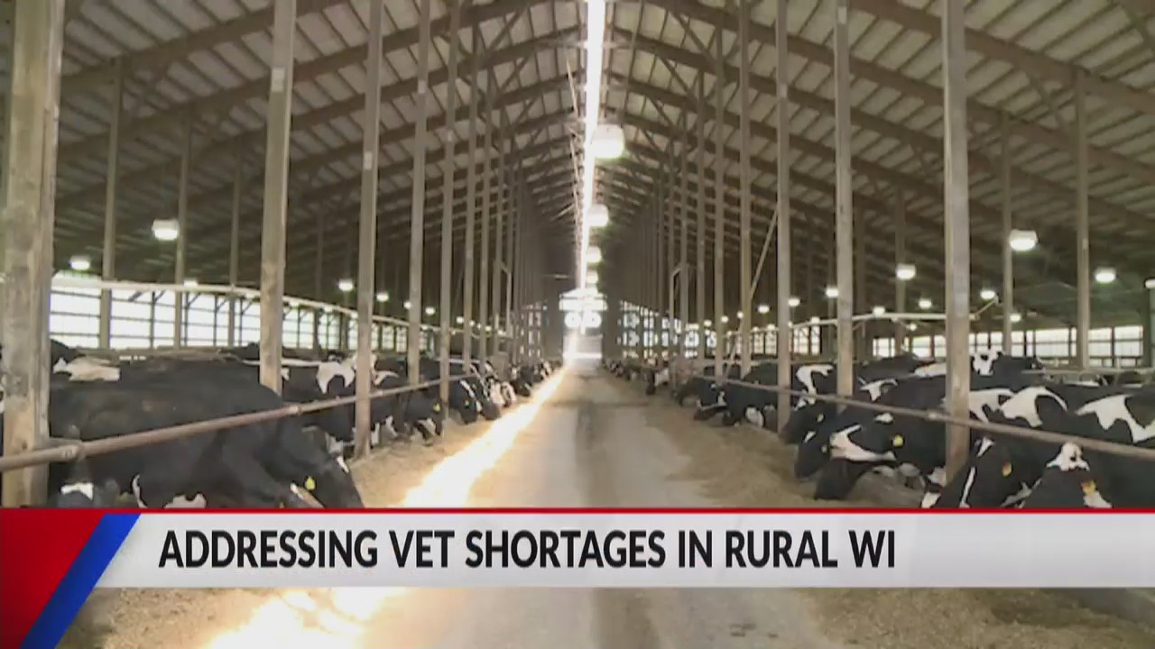 Rural veterinarian on state's shortage, new bill proposal