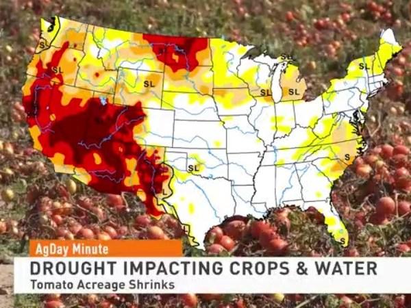 Drought impacting crops in california
