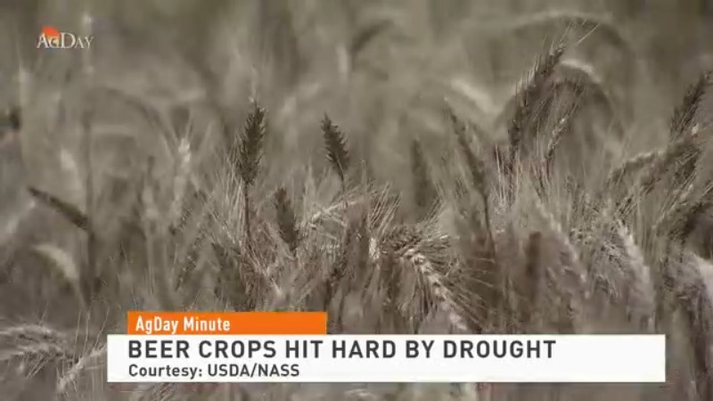 Beer crops hit hard by drought