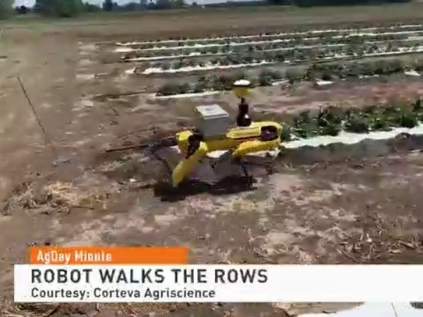 You Could Soon See A Robot Walking the Corn Rows