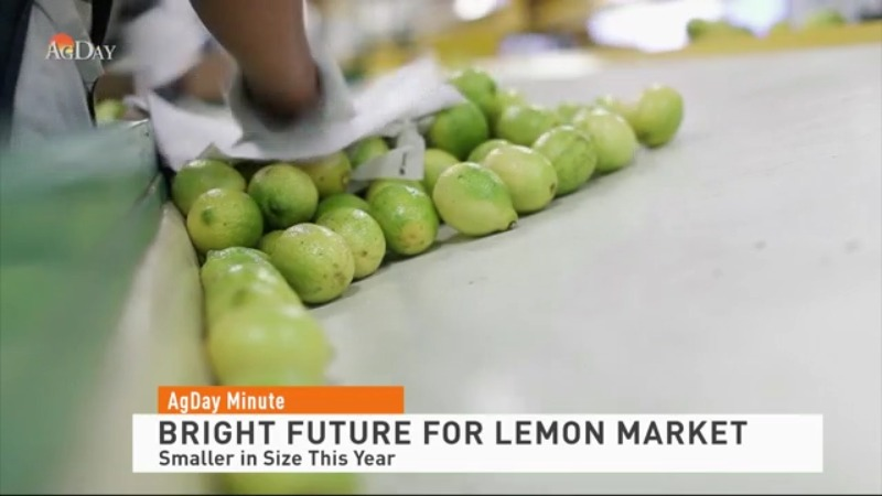 Bright future this year for lemon market