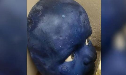 Baby Blue Head
